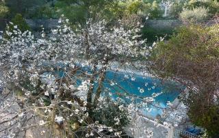 Piscine et arbre en fleur